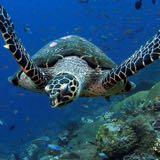 leatherbackturtle