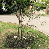 onemoretree