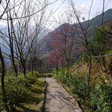 chiangshinyi