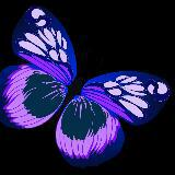 purple_butterfly