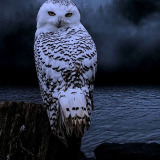 owlmommy
