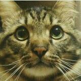 bobcatt11