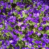 purple05