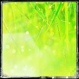 lawngrass