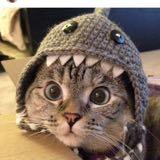 kitcat16