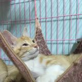milk_cat432