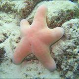 happystarfish