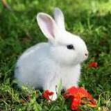 imawhiterabbit