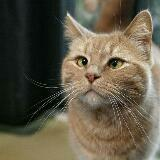 kittycatmeowmeow