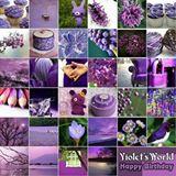 violet95