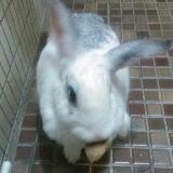 rabbit210281