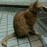 cat841211