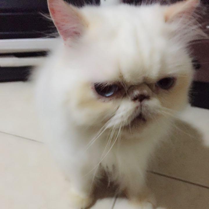 threecat