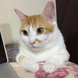 kittywang717