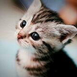 sachi.cat