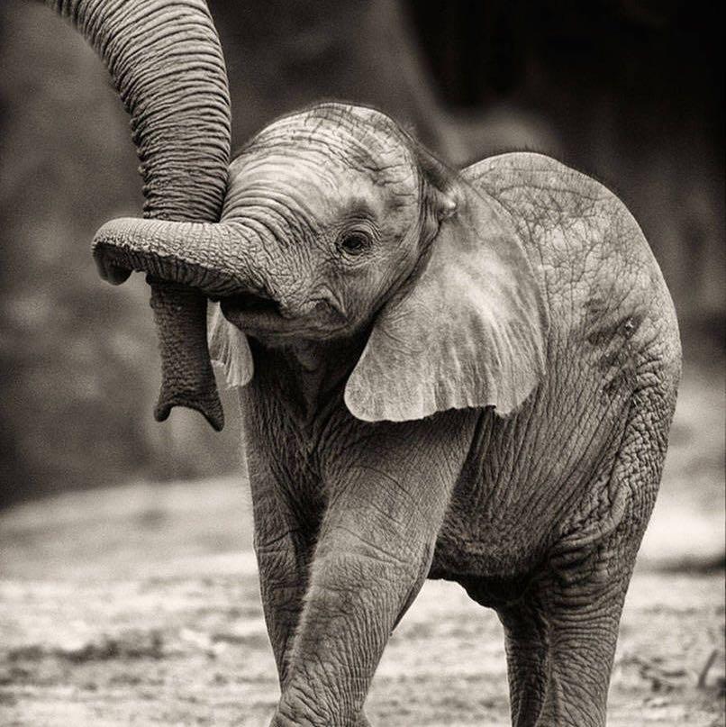 elephantgirl