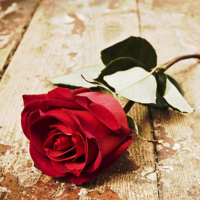 dainty_roses