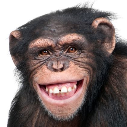 chimpchimp