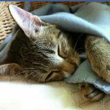 mattiethecat