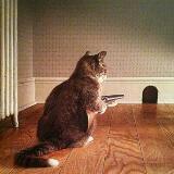 cat7121