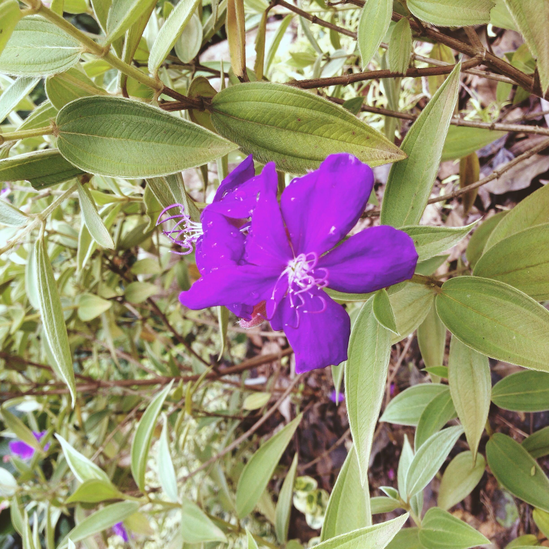 lilieshepey