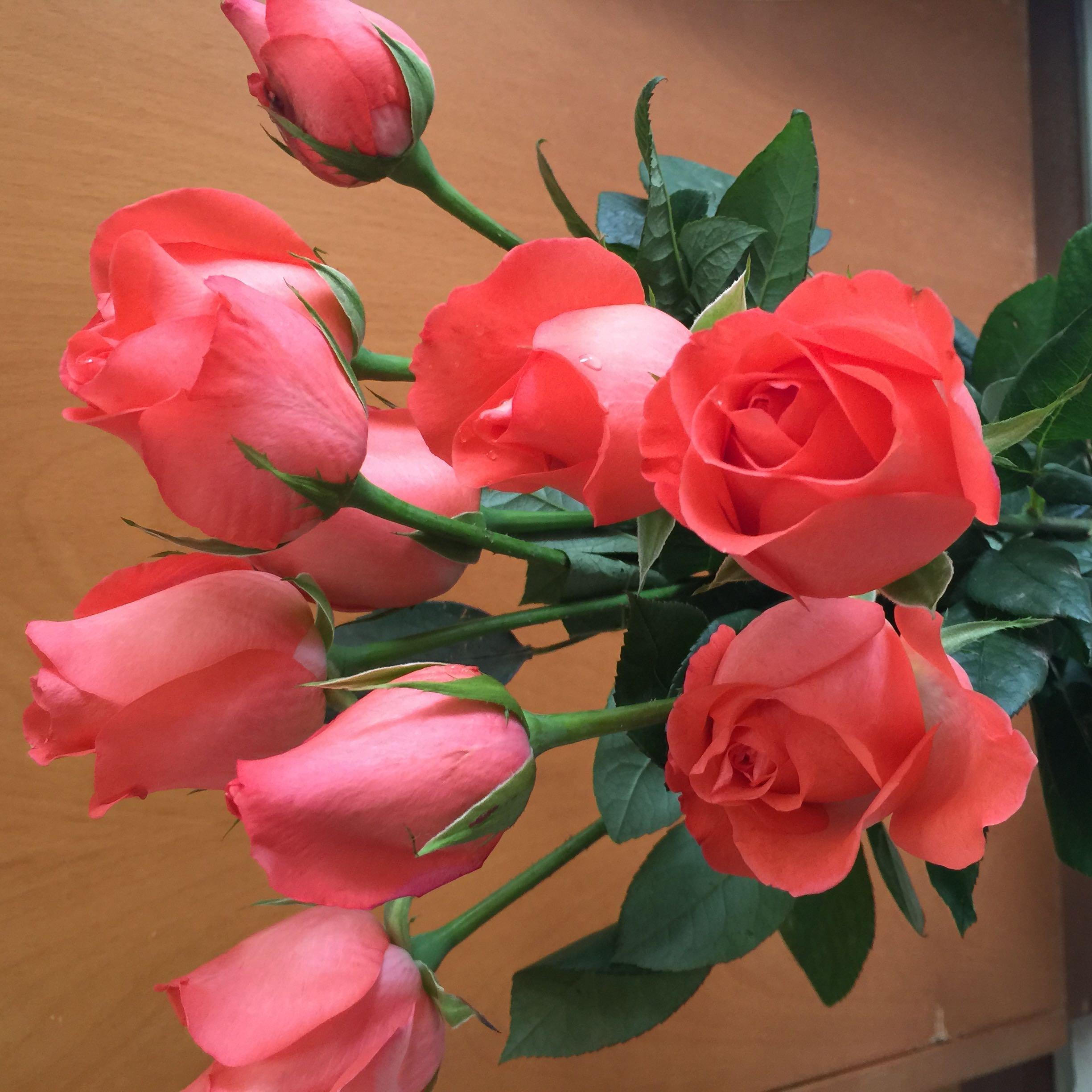 roselouise