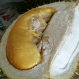 mr.durian