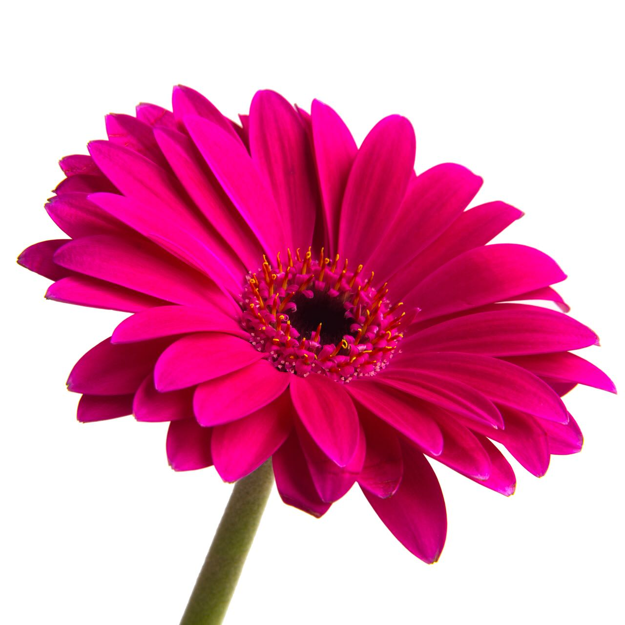 flowerjess