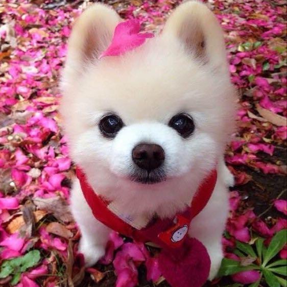 hayley_tsang
