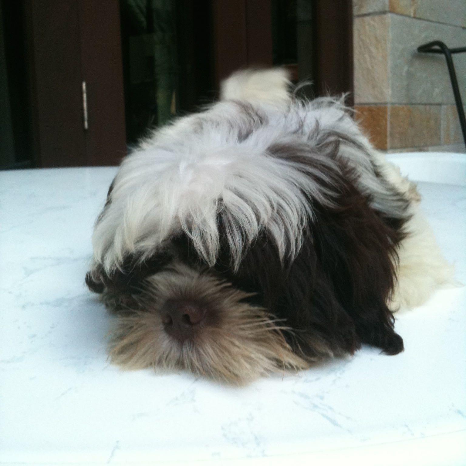 guaiguaithedog