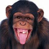 i.is.ape.