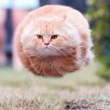 furryball
