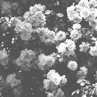 flowersx