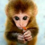 monkeyyyyyyy