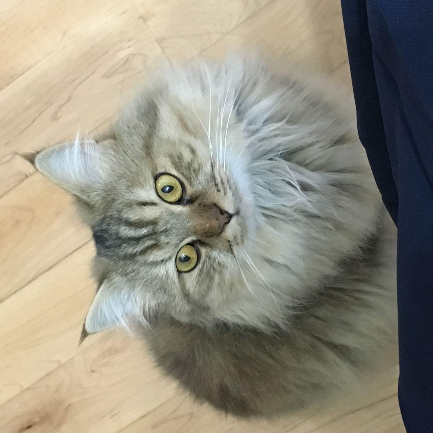 cat4s