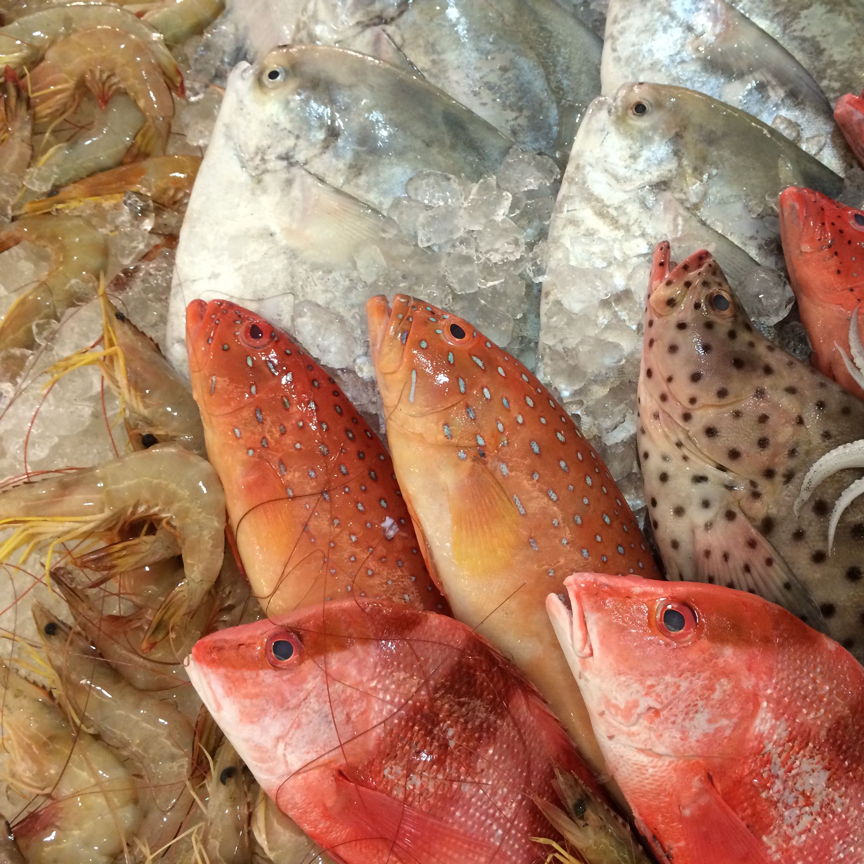 fishermanho
