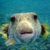 gigigaga.fish