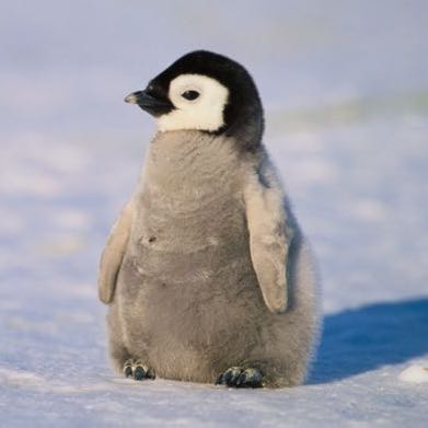 fanguin