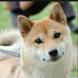 doglover143