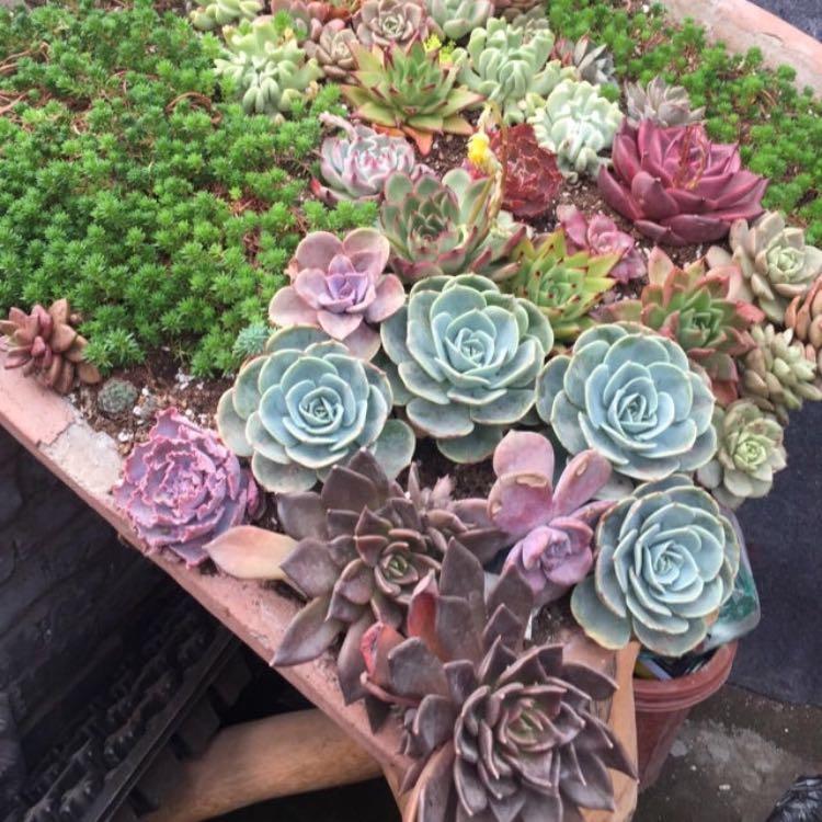 succulentsbo