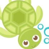 turtle2016