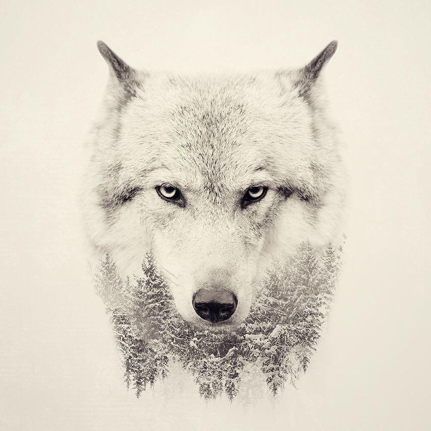dauntingwolf