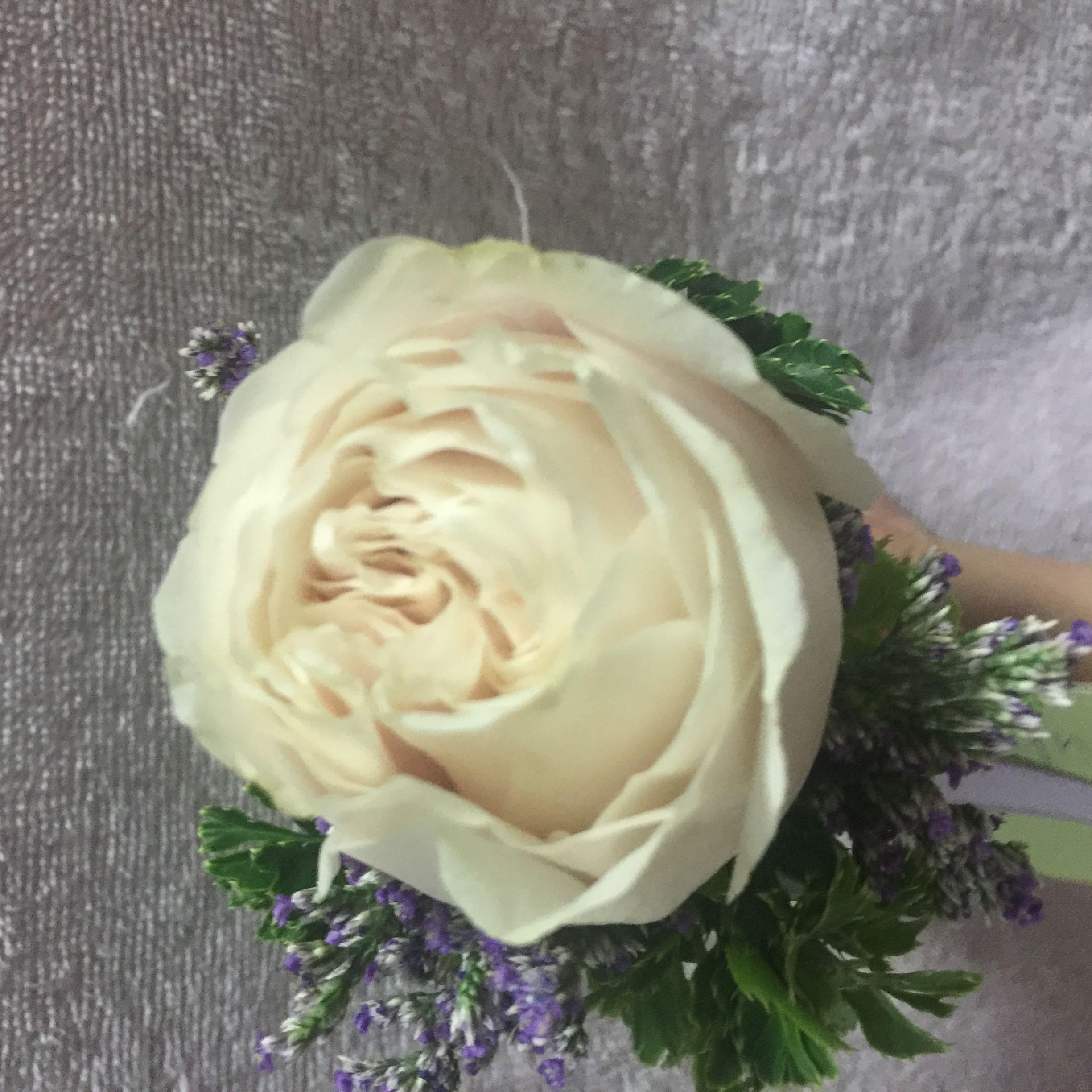 roselynette