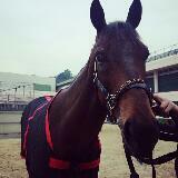 blackhorse115