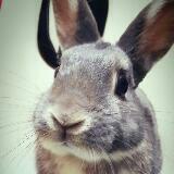 viki_bunny