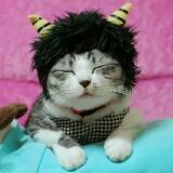 catshopping