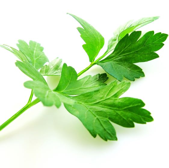 parsley__