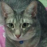 catlover1706