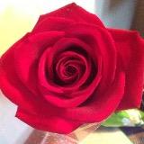 rosesxkisses