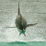 fishy92